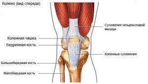 Изображение - Медиальный ретинакулум коленного сустава 931791eac43a21d630c51c019d8e0000_S